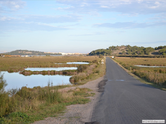 Road through the marshland